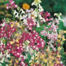 """2000 Seeds USA TOADFLAX/SPURRED SNAPDRAGON MIX Flower Seeds Summer to Fall DWARF 12"""" Tall"""