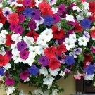 200 Seeds USA PETUNIA HYBRIDA MIX Flower Seeds Hanging Baskets Beds Window Box Container