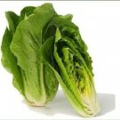100 FRESH HEIRLOOM ROMAINE LETTUCE PARRIS ISLAND COS SEEDS  USA SHIPPING