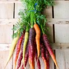USA Product500 RAINBOW CARROT MIX White Red Yellow Purple Orange Daucus Carrota Seeds +Gift