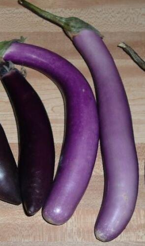 USA Product25 BRIDE EGGPLANT White & Purple Fruit / Vegetable Solanum Melongena Seeds +Gift
