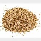 USA Product250 LEISURE CILANTRO / CORIANDER Coriandrum Sativum Herb Vegetable Seeds *CombSH