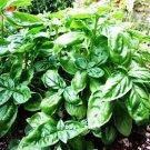 USA Product200 MOZZARELLA BASIL Sweet Italian Heirloom Ocimum Basilicum Herb Flower Seeds