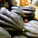 USA Product50 TABLE KING ACORN SQUASH Winter or Summer Cucurbita Maxima Vegetable Seeds
