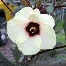USA Product150 EMERALD GREEN VELVET OKRA Spineless Abelmoschus Esculentus Vegetable Seeds