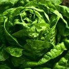 USA Product1000 GREAT LAKES LETTUCE Batavian ICEBERG Lactuca Sativa Vegetable Seeds *CombSH