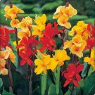 USA Product5 MIXED CANNA LILY Generalis Mix Colors Red Yellow Hummingbird Flower Seeds