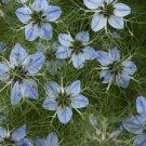 USA Product150 NIGELLA SATIVA BLACK CUMIN Spice Black Caraway Fennel Flower Herb Seeds