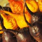 USA Product30 BURPEE'S GOLDEN BEET Beta Vulgaris Yellow Root Vegetable Seeds *Combined S/H