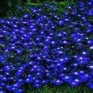 USA Product200 BLUE & WHITE HALF MOON LOBELIA Erinus Flower Seeds *Comb S/H