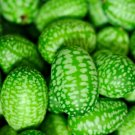 USA Product10 CUCAMELON Melothria Scabra Mouse Melon Mexican Mini Watermelon Fruit Seeds