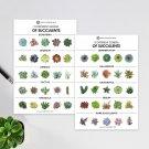 Succulent Postcard - 10 Different Genera of Succulents Succulent Postcard From USA