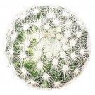 Mammillaria Carmenae Albiflora Isla Carmen Pincushion Cactus 3.5 Inch From USA