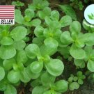 Kolokolo Store Golden Purslane  250 Seeds  FRESH Herb Vegetable SEEDS USASELLER