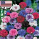 Kolokolo Store 250 Seeds CORNFLOWER / BACHELOR BUTTON SEEDS  DWARF MIX Centaurea cyanus USA A#1