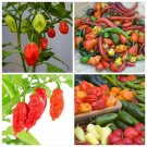 Kolokolo Store 50 Seeds Super Hot Pepper Mix Many Varieties Ghost, habanero pepper many other