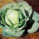 Kolokolo Store Cabbage Early Jersey Wakefield 200 seeds BOGO 50% off SALE