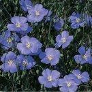 Kolokolo Store Flax Blue Linum Perene200 seeds   BOGO 50% off SALE