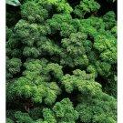 Kolokolo Store Parsley Moss Curled 200 Seeds BOGO 50% off SALE