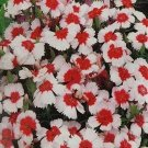 Kolokolo Store Dianthus Merry go Round 50 Seeds BOGO 50% off SALE