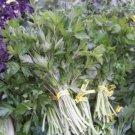 Kolokolo Store parsley, Italian, HERB AND GARNISH, flat leafed, 70 seeds GroCo