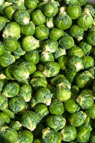Kolokolo Store brussel sprouts, BRUSSELS SPROUT, 520 SEEDS GroCo US USA