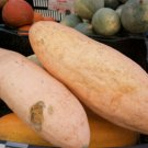 Kolokolo Store squash, BANANA pink, HEIRLOOM 20 SEEDS GroCo#