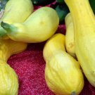 Kolokolo Store squash, CROOKNECK, golden summer, 25 seeds GroCo