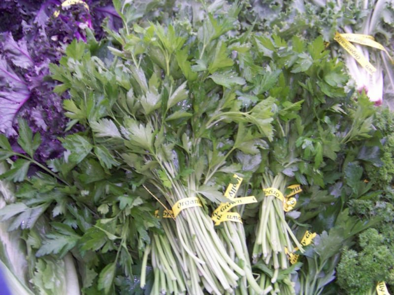 Kolokolo Store parsley, HERB AND GARNISH, 940 seeds GroCo