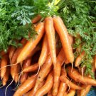 "Kolokolo Store carrot, IMPERATOR, 7 TO 9"" LONG, (2 PACKETS OF 205) SEEDS GroCo* buy US USA"