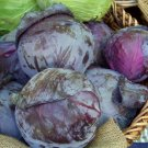 Kolokolo Store cabbage, RED ACRE PURPLE CABBAGE, 93 seeds GroCo