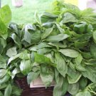 Kolokolo Store basil, LICORICE, RARE SCENTED BASIL culinary herb (2 PACKETS OF 225 seeds) GroCo
