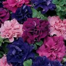 Kolokolo Store 50 Double Pink Red Purple Mix Petunia Seeds Containers Hanging Baskets Seed 968