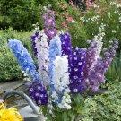 Kolokolo Store 50 Pacific Mix Delphinium Seeds Perennial Garden Flower Bright Seed Flowers 123