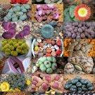 Kolokolo Store STONE PLANTS MIX , lithops mesembs succulent rocks living stones seed 50 SEEDS