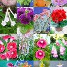 Kolokolo Store COLOR SINNINGIA MIX rare african violets fragrant garden flower seed 300 seeds