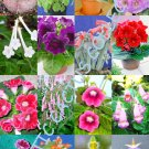 Kolokolo Store COLOR SINNINGIA MIX rare african violets fragrant garden flower seed 150 seeds