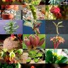Kolokolo Store EXOTIC MONADENIUM MIX @j@ flowering rare succulent cactus variety seed 10 SEEDS