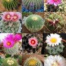 Kolokolo Store EXOTIC ECHINOCACTUS MIX variety flowering barrel cactus rare cacti seed 15 SEEDS