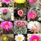 Kolokolo Store FLOWERING ECHINOCACTUS MIX variety exotic barrel cactus rare cacti seed 15 SEEDS