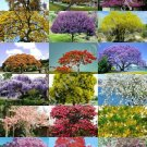 Kolokolo Store COLOR TREE MIX rare flower plant flowering fragrant bonsai trees seed 15 seeds