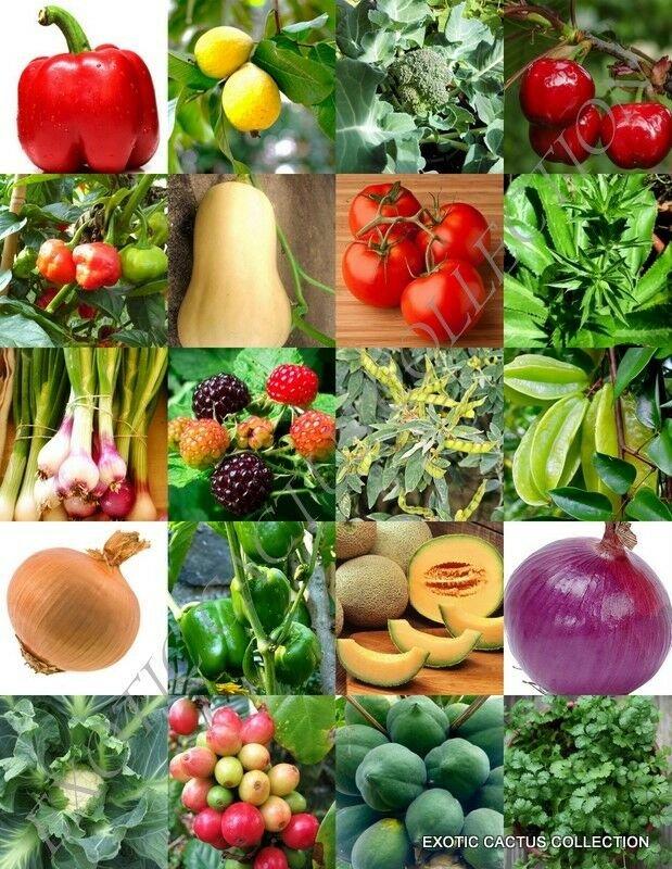 Kolokolo Store ORGANIC FRUITS & VEGETABLE MIX, heirloom garden non gmo assorted seed 150 seeds