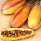 Kolokolo Store Banana passionfruit, PASSIFLORA MOLLISSIMA passion fruit flower seed 50 SEEDS