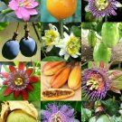 Kolokolo Store PASSIFLORA mix  PASSION FRUIT exotic edible tropical flower vine seed 15 seeds