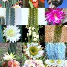 Kolokolo Store CEREUS CACTUS MIX, rare garden night cacti exotic desert succulent seed 50 seeds