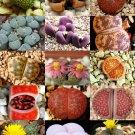 Kolokolo Store RARE Lithops MIX succulent cactus EXOTIC living stones desert rock seed 15 SEEDS