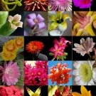 Kolokolo Store FLOWERING SUCCULENT MIX rare plant exotic cactus flower succulents seed 30 seeds