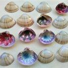 Memory game of 16, hand-painted, seashells, Mactra Stultorum and Abra Alba (015)