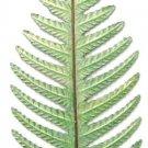 Fern Leaf  Large | Refrigerator Magnet | Handpainted Magnets | Plant Magnets