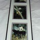 Giant Panda Bear Prints Mark J Thomas Framed Published Photographer
